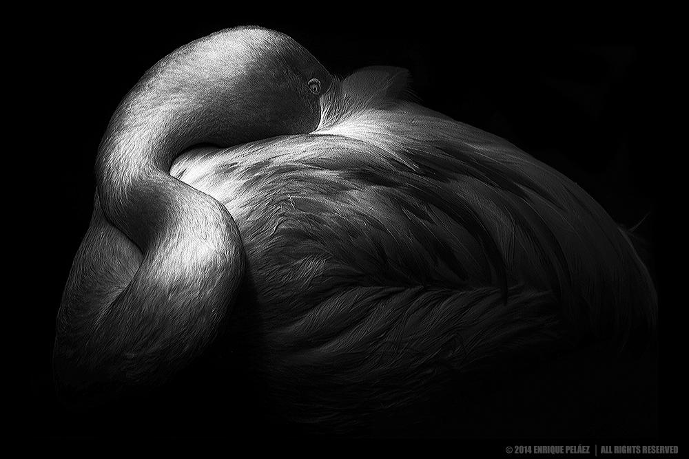 Fotografía Artística En Blanco Y Negro 1 De 3 All About Monochrome